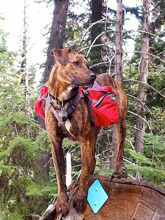 Camp and Hike We are excited to welcome Tater as the newest member of the Ruffwear pack! 