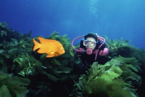 Scuba Horizon Charters, San Diego, CA - Southern Channel Islands Dive   (858) 277-7823