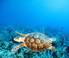 Scuba Dive Key West offers both scuba diving and snorkeling in The Florida Keys National Marine Sanctuary   800.426.0707