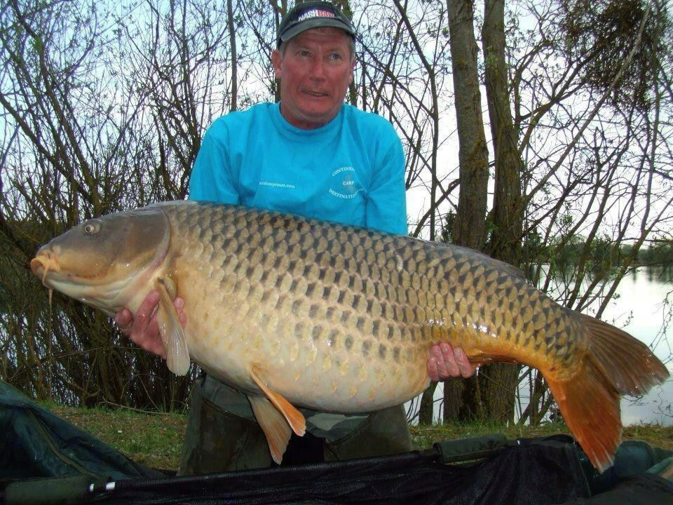 Fishing World-record carp caught twice in a week by different anglers.  Article by David Strege posted May 7, 2013