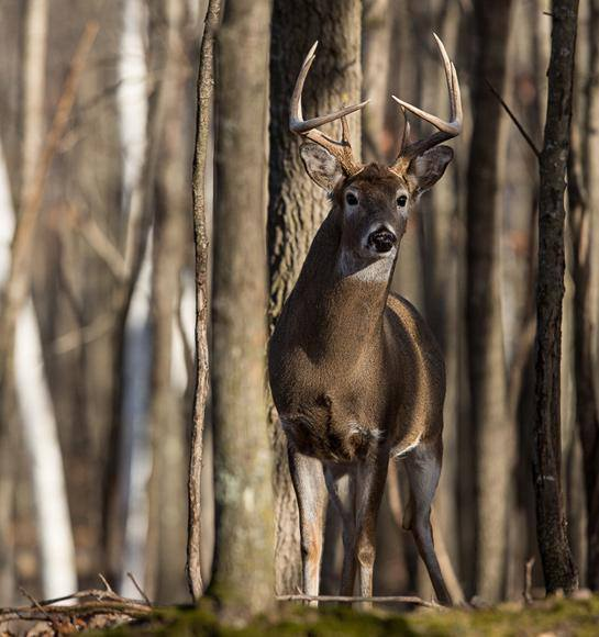Hunting If you deer hunt on public land, you need to read this special report on why America's whitetail woods are in trouble. Make sure to share this with your hunting buddies: http://bit.ly/10y0kqt