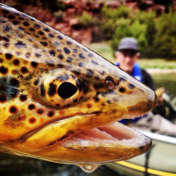 "Flyfishing ""Fly fishing with my pop on the Green River."" 