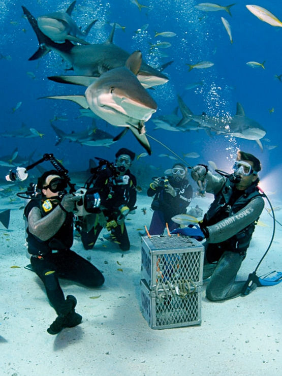 Scuba Shark-feeding dives with Stuart Cove's in the waters just off Nassau bring you within mere inches of Caribbean reef sharks