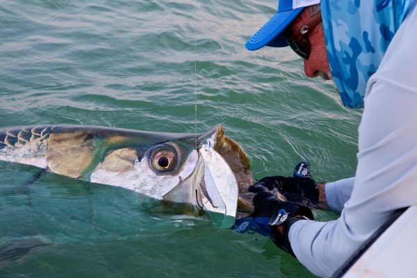 Fishing 200-plus-pound tarpon in the Florida Keys