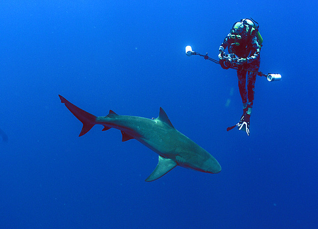 Scuba Valda Fraser with a lovely bull shark passing under her camera.