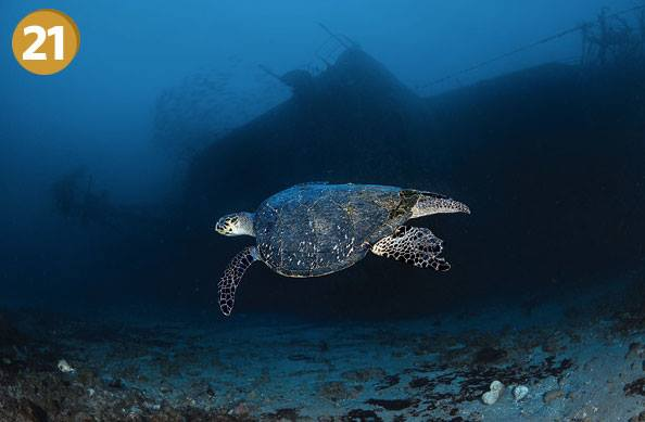 Scuba We've put together a photo gallery of the world's 50 greatest dive sites. No. 21: Statia's Charlie Brown wreck, photographed by Damien Mauric. Did your favorite site make the list? http://bit.ly/15e6H37