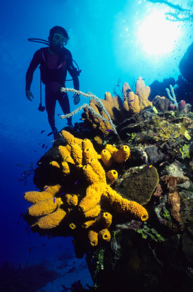 Scuba Caribbean dive vacations - choose from 15 yacht options at: carefreecharters.com