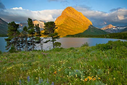 Camp and Hike Colorful wildflowers along Swiftcurrent Lake in the Many Glacier Valley of Montana's Glacier National Park