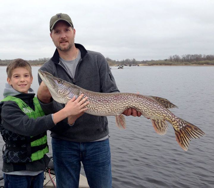Fishing Jack Klein, age 9, of Sauk Rapids, Minn., caught and released this 40-inch northern while fishing with his dad, Jeff, on Upper Red Lake on May 18, 2013.