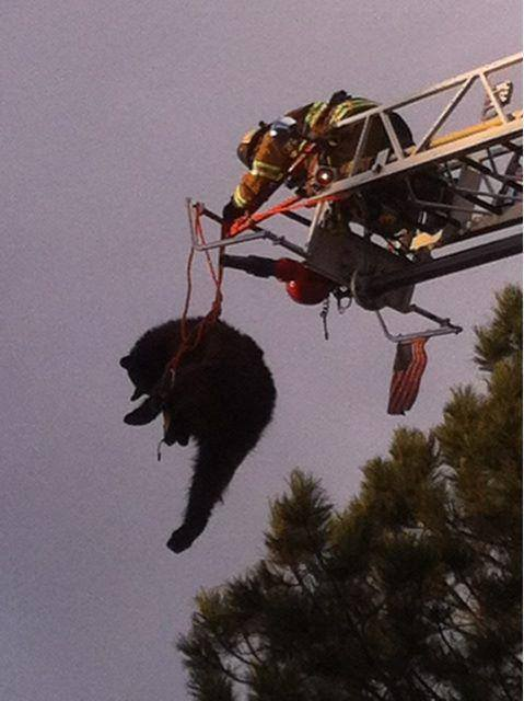 Entertainment A black bear climbed up a tree in Colorado Springs. Officials responded with a crane. See the story here: http://bit.ly/10kNOve