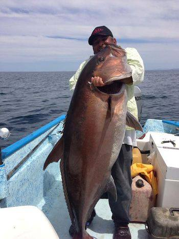 Fishing This monster amberjack could have challenged the world record, but instead it became lunch. See the story here: http://bit.ly/10nlxE7
