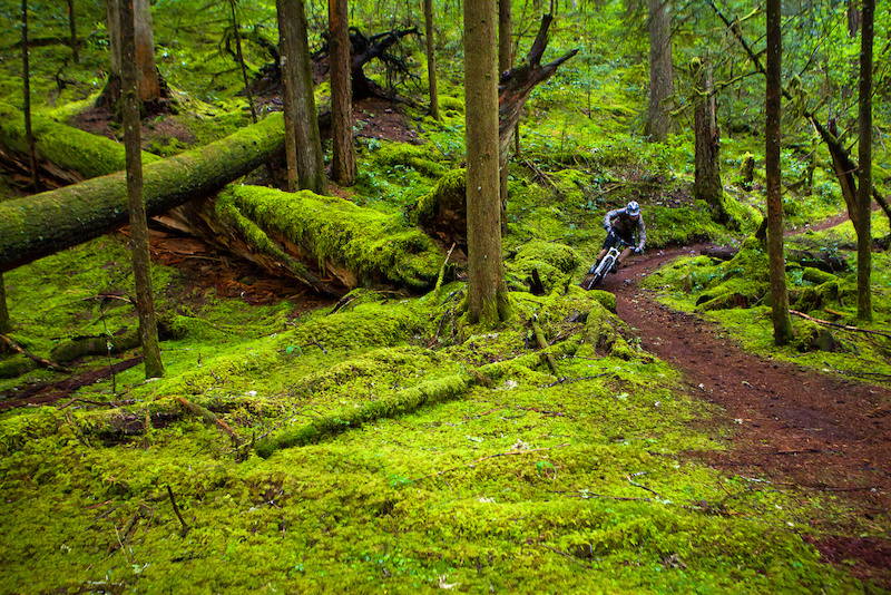 "MTB The McKenzie River trail has been listed over and over in ""top 10 must ride"" lists. There is a very good reason for that. However, when we rode it we did not see a single person anywhere on it. Weird..."