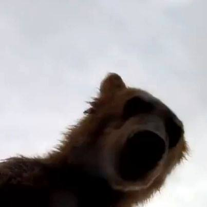 Entertainment This video shows the last thing you'll see if you tangle with a grizzly. Warning: it's kinda gross, especially with the sound on. http://bit.ly/10XZjrW