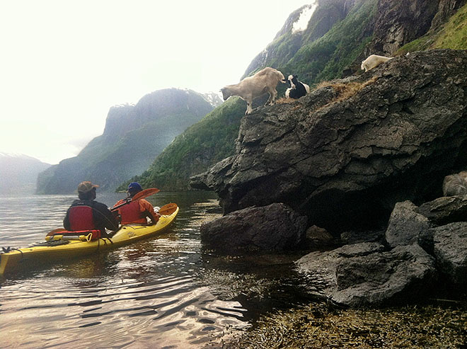Kayak and Canoe The Men Who Stare At Norwegian Goats