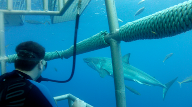 Scuba Guadalupe Island Great White Shark Trip - Oct. 11-16, 2013. Space is limited. Book your spot TODAY! www.ilivedeeper.com