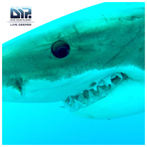Scuba I. LOVE. SHARKS! Guadalupe Island. Oct. 11-16, 2013. Join us! www.ilivedeeper.com
