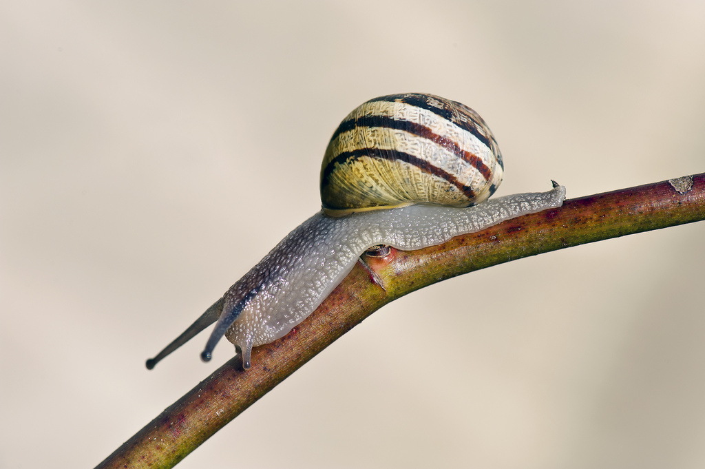 Camp and Hike Snail