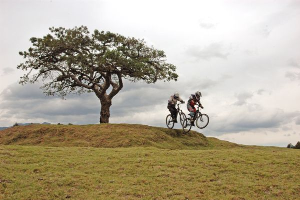 MTB Two riders bike near a tree in Ecuador.