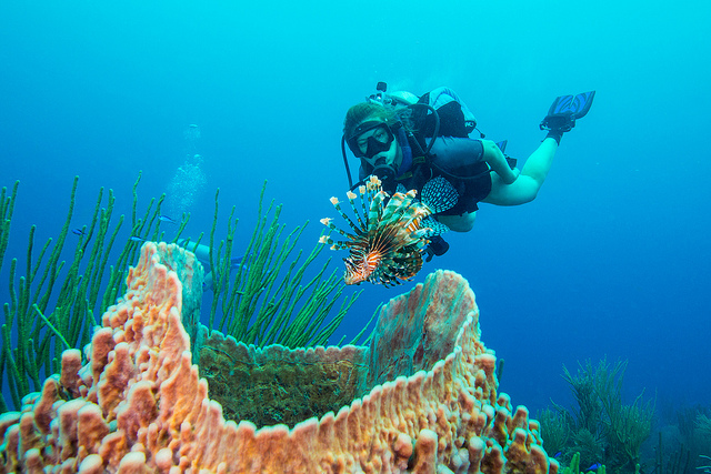 Scuba Invasive Lionfish are everywhere on the reefs in Belize.