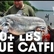 100 Plus Pound Blue Catfish: Missouri River, Missouri - Northwoods Angling