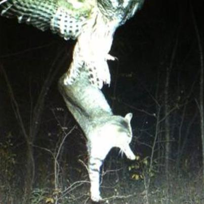 Hunting On a trail camera in Northern Minnesota...good i hate cats