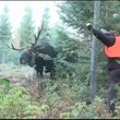 IDIOT VS Bull Moose