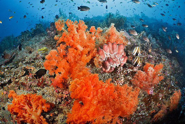Scuba Shallow reefscape on Pescador
