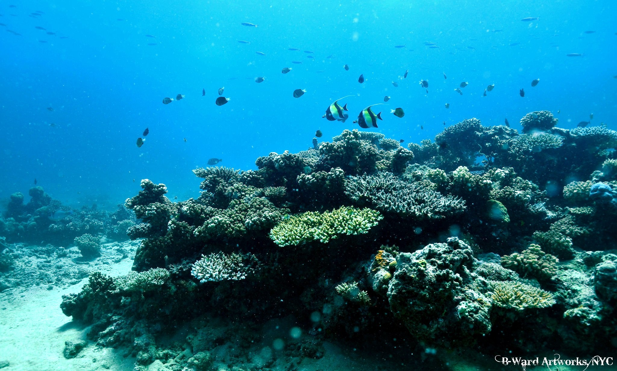 Scuba Reefscape at Beqa Lagoon, Fiji