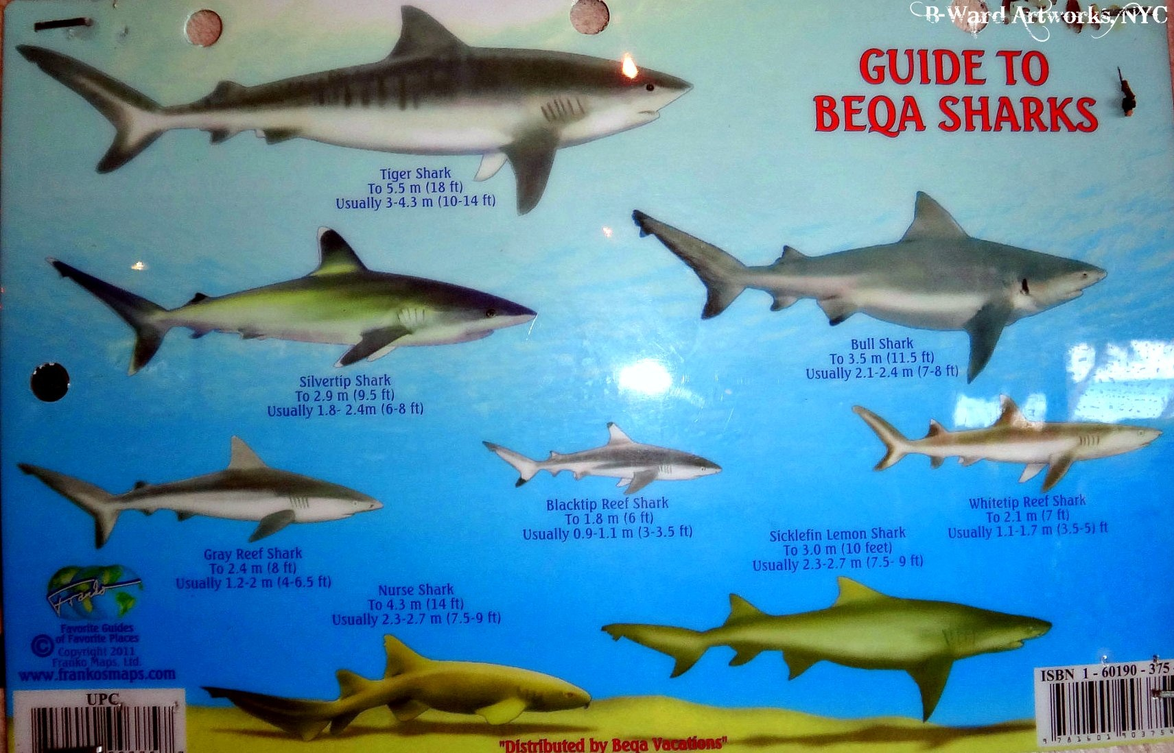 Scuba All the sharks you can expect to see at Beqa Lagoon, Fiji