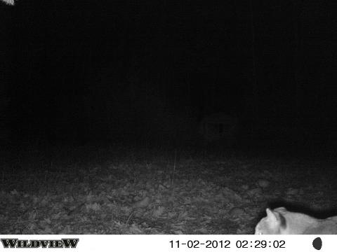Hunting Here is a trail cam photo from the Amberg, Wisconsin area. 