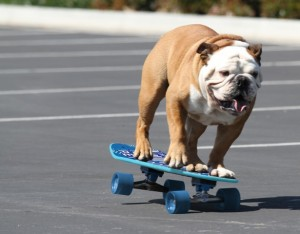 Skateboard Tillman The Dog