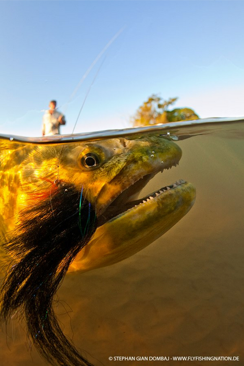 Flyfishing One of the coolest pics we have seen in a long time!  