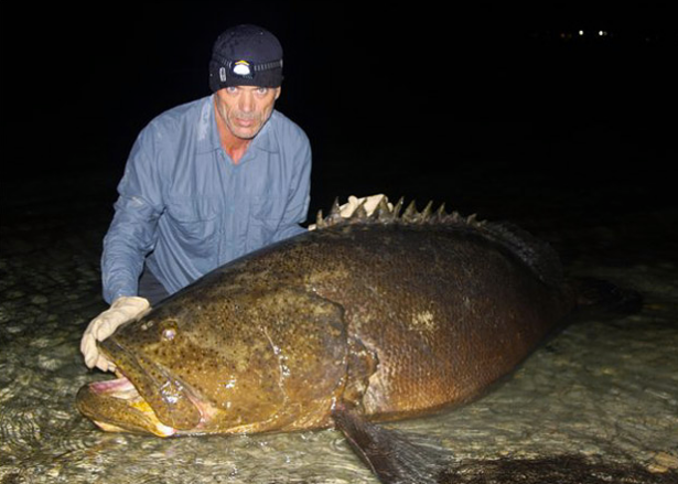 Fishing Goliath Grouper Pictures!  Another monster from Jeremy Wade.  