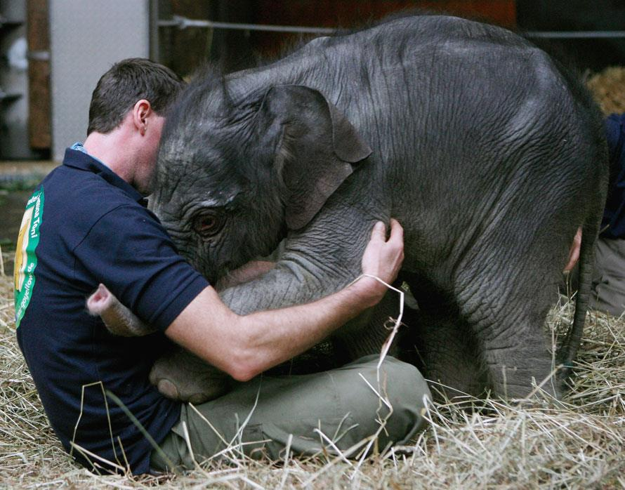 Entertainment Baby elephant greets her keeper