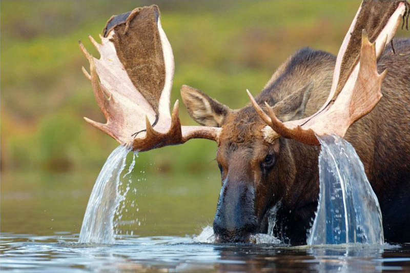 Camp and Hike 