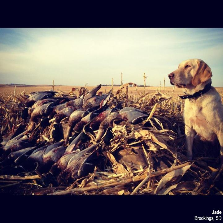 Hunting Click 'Like' to vote for Jade from Brookings, SD!