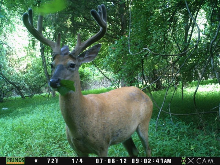Hunting Great pic submitted by Michael Marren.