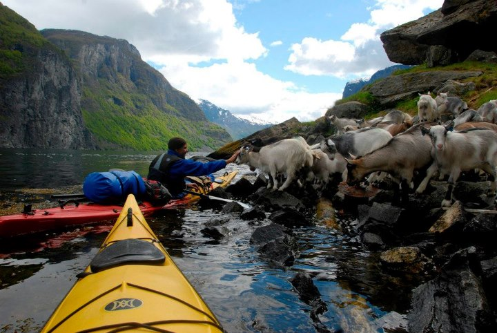 Kayak and Canoe Who loves kayaking, fjords … and friendly goats? For Travel Tuesday today we're paddling through the Naeroyfjord during an REI Norwegian Fjords kayaking & hiking trip (more info here: http://bit.ly/IjL1Y8). The group was kayaking from their farm guesthous