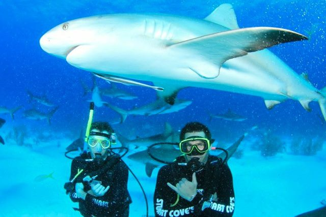 Scuba Diving with sharks! Screenshot from video off a CONTOUR.