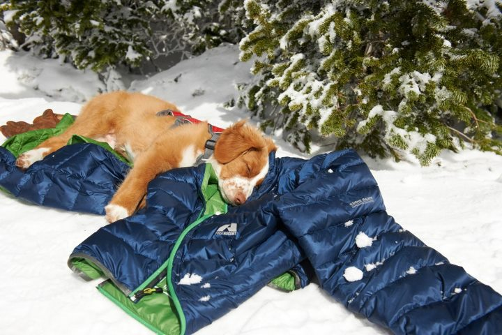 Entertainment On the Seventh Day of Downlight, he rested, like this Crystal Mountain rescue dog in training. 50% off the Downlight Jacket in all Eddie Bauer stores and online.  Shop Women's Downlight: http://ow.ly/fIwcW Shop Men's Downlight: http://ow.ly/fIwj3
