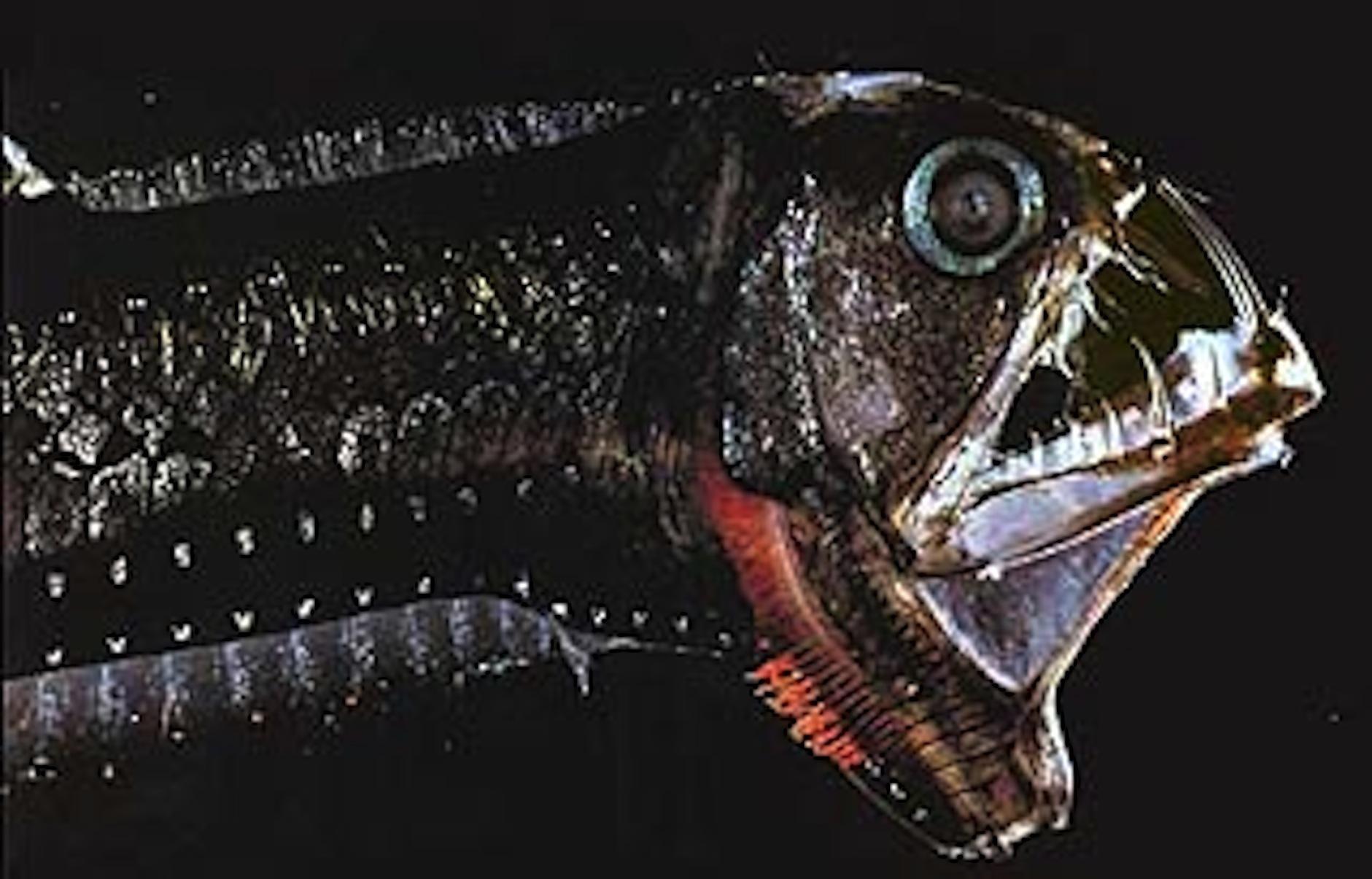 Самые страшные глубоководные рыбы фото 18 фотография