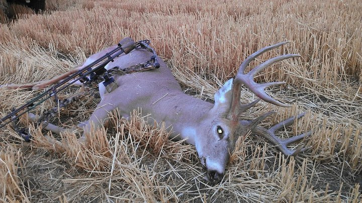 Hunting Congrats to our buddy Richard on his awesome Montana archery Whiteail