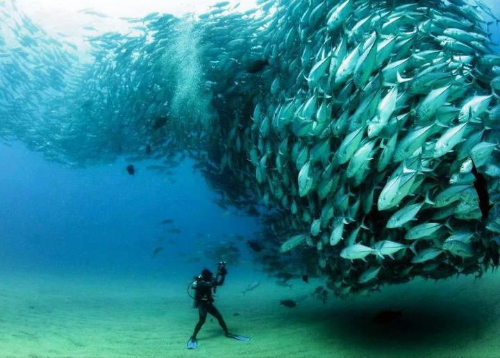Scuba Photo by Octavio Aburto