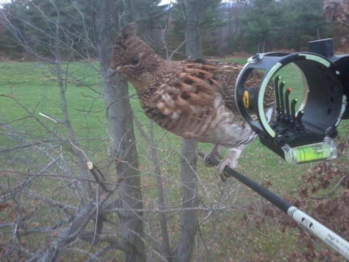 Hunting Ruffed grouse anyone?? Really??? How cool is that