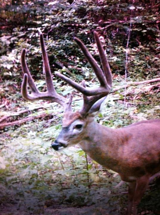 Hunting In the stand filming Felipe. Hoping this buck shows up, he was on one of the cameras at 7am this morning, so he's in the hood. This velvet picture was of him in August 2012.