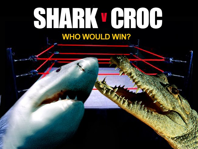 Entertainment Hope everyone is off to a good start this week. Today, an ever so important question: In an animal face-off, who would win: a shark or crocodile? We're not taking bets, but we're thinking that some of you might disagree with the declared winner. Take a lo