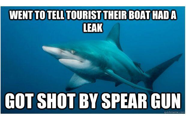 Scuba Meme Monday! The 25 Funniest Shark Memes | Complex. Which one is your favorite? Least favorite...? http://buff.ly/MLx1vt