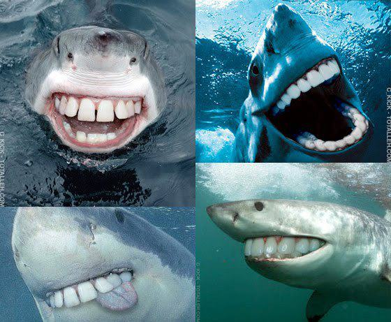 Scuba Sharks with human teeth are much less scary.