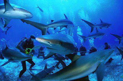 Scuba Amazing photo, but not a recommended use for Shark Shield!