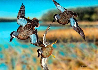 Hunting Who is ready to see these missles dive bomding into your decoys next month? Get out the gun, dust off the barrel, grab some shells, and get your butt to the skeet range because those suckers are fast.